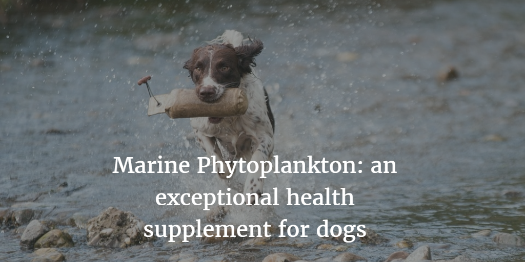 marine phytoplankton for dogs with cancer